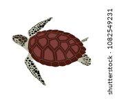 vector illustration of a sea... | Shutterstock .eps vector #1082549231