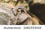 beautiful lizard closeup  macro ...   Shutterstock . vector #1082553434