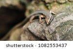 beautiful lizard closeup  macro ...   Shutterstock . vector #1082553437