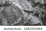 beautiful lizard closeup  macro ...   Shutterstock . vector #1082553464