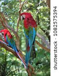 red and green macaw   ara... | Shutterstock . vector #1082575394