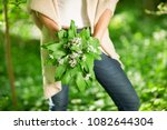 woman hands holding wild garlic ... | Shutterstock . vector #1082644304