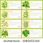natural herbal spices with... | Shutterstock .eps vector #1082652164