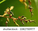 ant on wild flower | Shutterstock . vector #1082700977