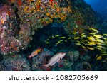 tropical fish swimming around a ... | Shutterstock . vector #1082705669