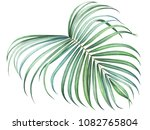 tropical palm branch isolated... | Shutterstock . vector #1082765804