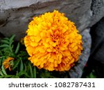 flowers on stones | Shutterstock . vector #1082787431