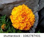 flowers on stones | Shutterstock . vector #1082787431