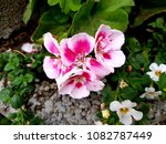 flowers on stones | Shutterstock . vector #1082787449