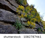 flowers on stones | Shutterstock . vector #1082787461