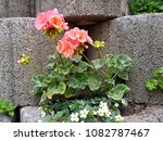 flowers on stones | Shutterstock . vector #1082787467