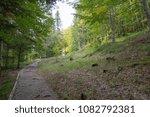 Stock photo autumn forest selva de irati fall beech jungle in navarra pyrenees of spain 1082792381