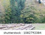Stock photo autumn forest selva de irati fall beech jungle in navarra pyrenees of spain 1082792384