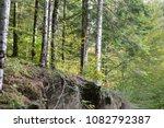 Stock photo autumn forest selva de irati fall beech jungle in navarra pyrenees of spain 1082792387