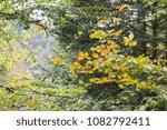 Stock photo autumn forest selva de irati fall beech jungle in navarra pyrenees of spain 1082792411