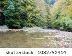 Stock photo autumn forest selva de irati fall beech jungle in navarra pyrenees of spain 1082792414