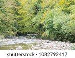 Stock photo autumn forest selva de irati fall beech jungle in navarra pyrenees of spain 1082792417