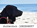 black labrador watching the sea | Shutterstock . vector #1082848097