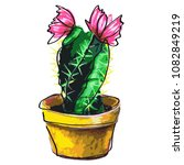 cactus succulent  isolated on a ... | Shutterstock . vector #1082849219