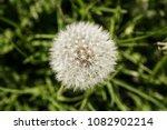 macro close of a dandelion | Shutterstock . vector #1082902214