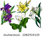 flowers. set of flowers.... | Shutterstock .eps vector #1082924135