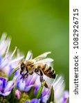 macro honey bees | Shutterstock . vector #1082926715