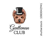 yorkshire terrier dog gentleman.... | Shutterstock .eps vector #1083042941