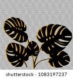 black leaves of monstera...