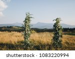 in the area of the wedding... | Shutterstock . vector #1083220994