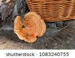harvested at autumn amazing... | Shutterstock . vector #1083240755