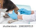 cropped image of veterinarian... | Shutterstock . vector #1083309515