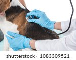cropped image of veterinarian... | Shutterstock . vector #1083309521