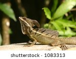 Reptil in the sun - stock photo