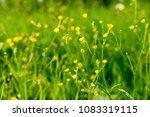 nature grass flower under the...   Shutterstock . vector #1083319115