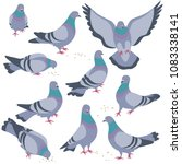 Set Of Rock Doves Isolated On...