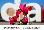 amsterdam tulip summer | Shutterstock . vector #1083363824