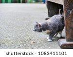 street cat eats sausage  the... | Shutterstock . vector #1083411101