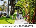 Stock photo dog sitter walking with dogs in california 1083474071