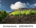 Cape Point Vineyards. Wine...