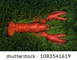lobster on the green grass  | Shutterstock . vector #1083541619