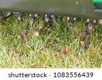 Small photo of Core aeration of tall fescue grass using a ride-on aerator