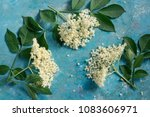 elderflower blossom flower with ... | Shutterstock . vector #1083606971
