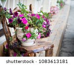 pot with lavatera flowers....   Shutterstock . vector #1083613181