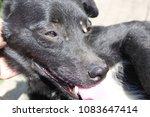 help clean ticks from dogs. | Shutterstock . vector #1083647414