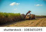 sugar cane hasvest plantation | Shutterstock . vector #1083651095