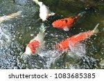 beautiful  crayfishs  playing ... | Shutterstock . vector #1083685385