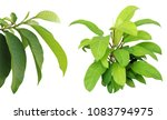 top view of the small plant... | Shutterstock . vector #1083794975