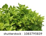 top view of the small plant... | Shutterstock . vector #1083795839