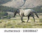 Black Hills Wild Horse...