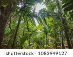 A Dense And Thick Jungle In Go...